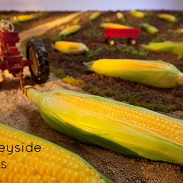 "Behind the scenes of the ""Merseyside Corn Field"" shoot"