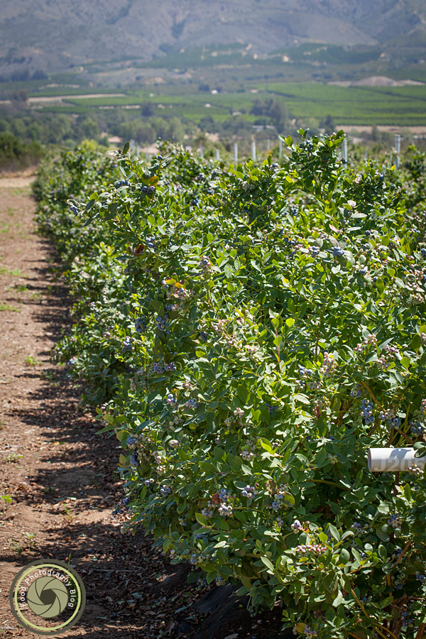 Blueberry Fields | Food Photography Blog