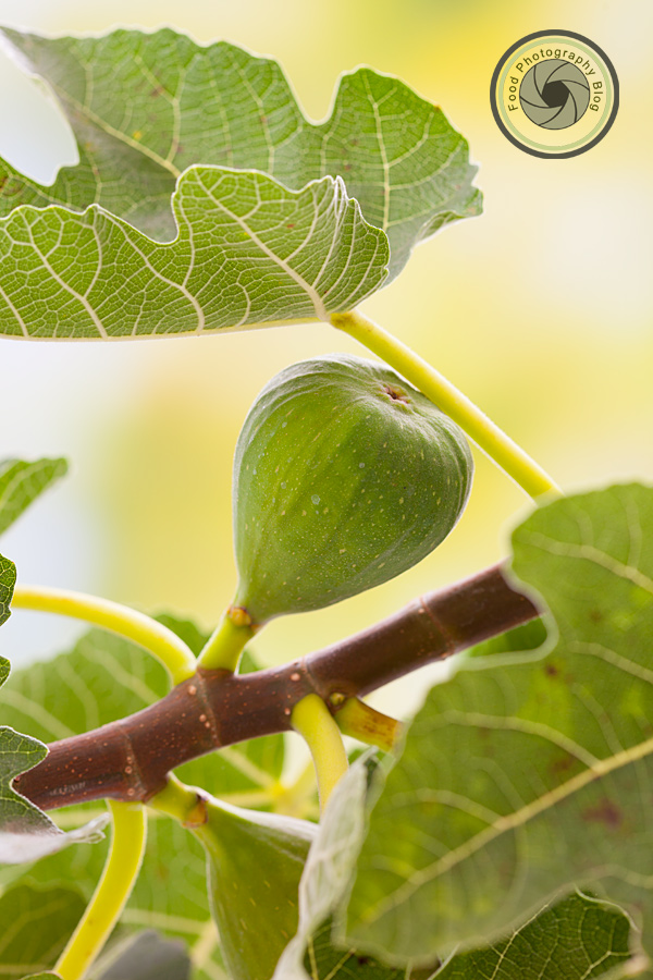 Fig Tree | Food Photography Blog
