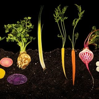 Inspiring Food Photography from The Modernist Cuisine