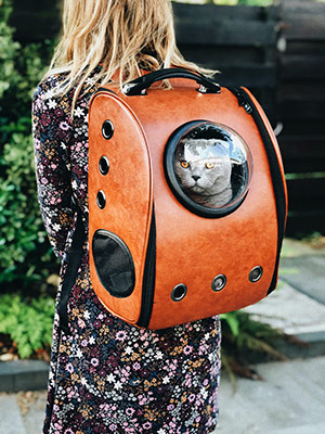 Gray cat in a leather backpack