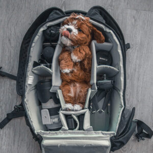 Image of a puppy inside a camera bag